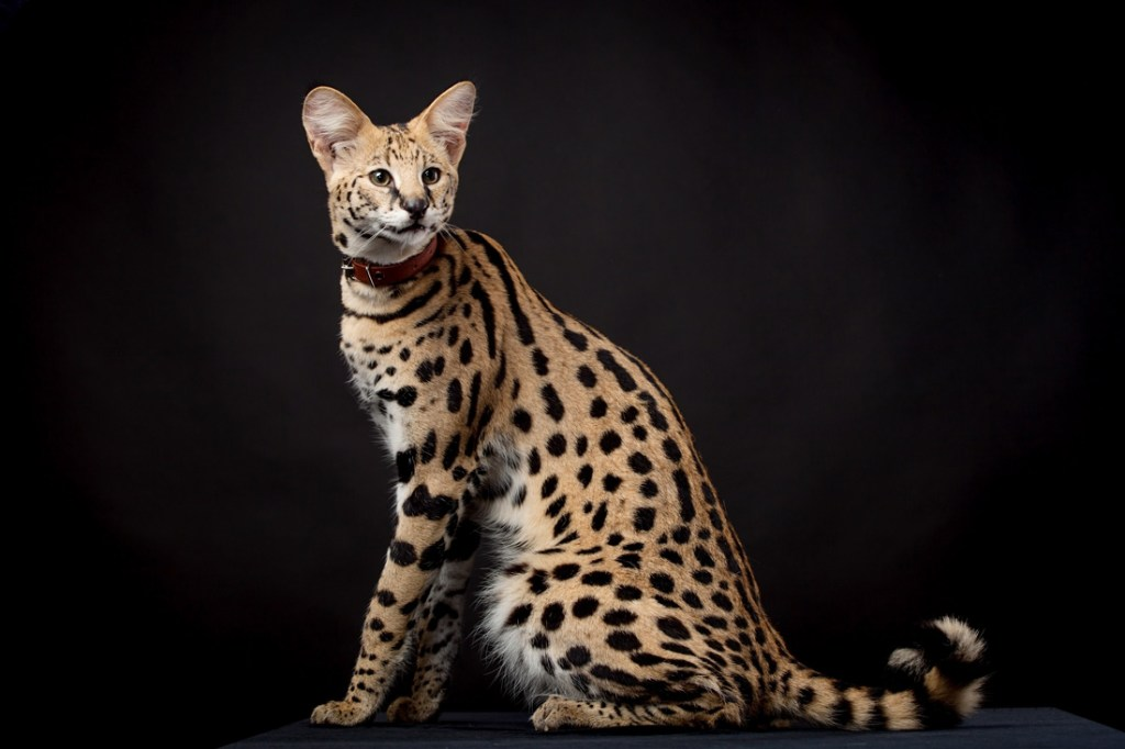 10 rare cute exotic
