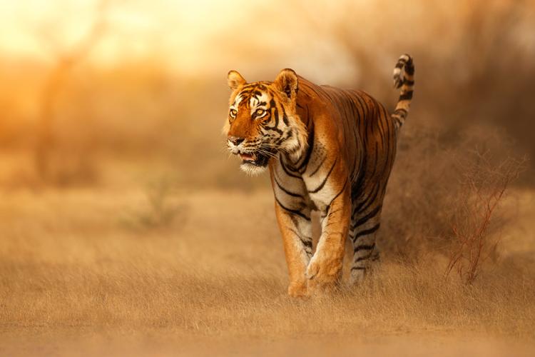 amazing encounters with wild