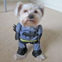 Batman Dog Costume | Shut Up And Take My Money