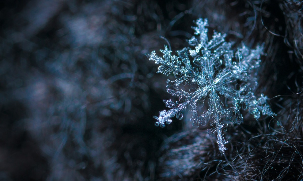 How to photograph a snow flake