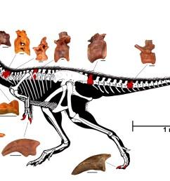 diagram of skeleton [ 3833 x 2254 Pixel ]