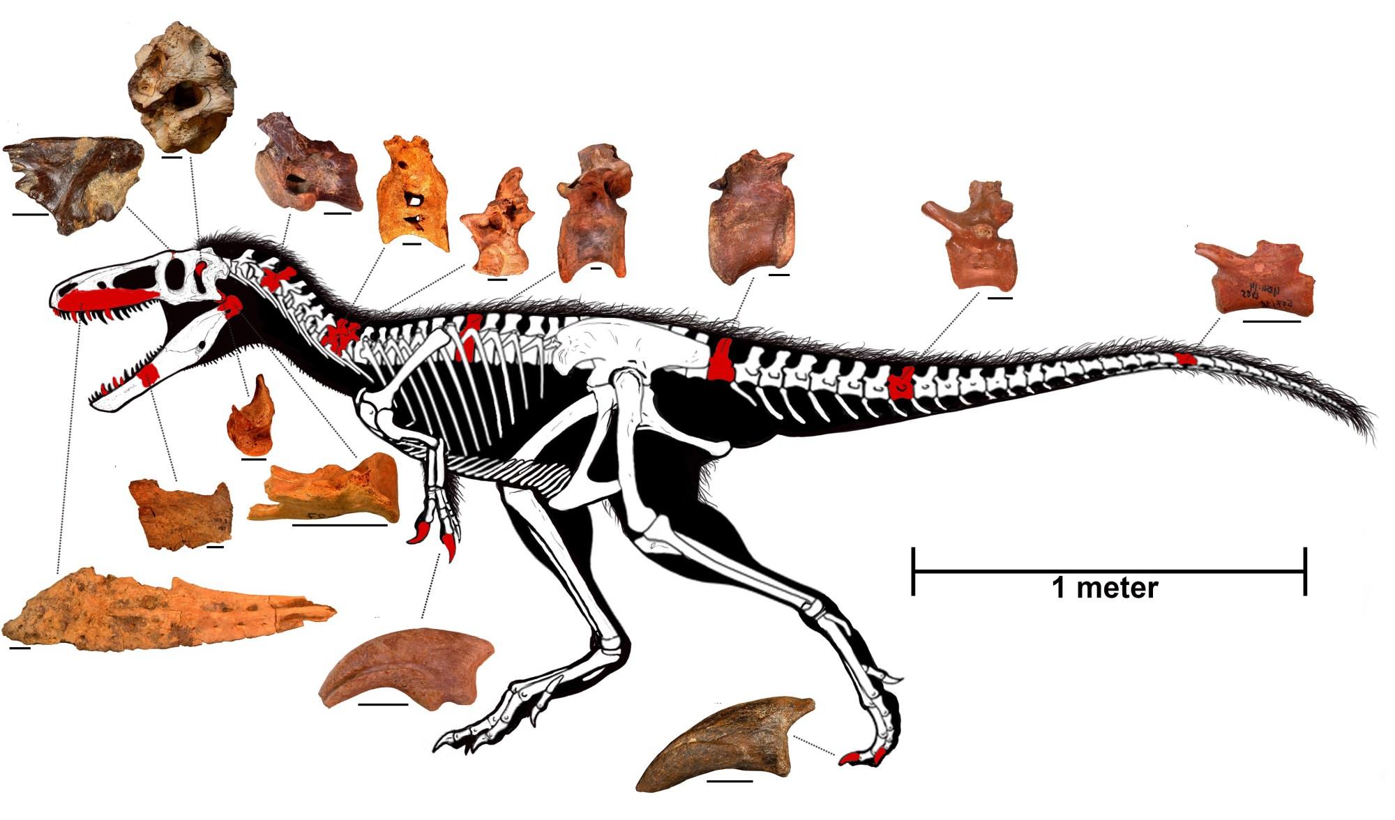 hight resolution of diagram of skeleton