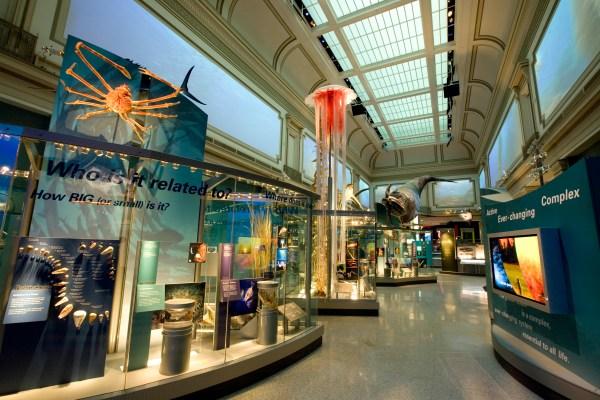 Sant Ocean Hall Opens Sept. 27 Smithsonian