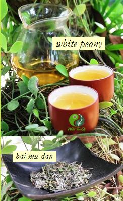 Pai Mu Tan / Bai Mu Dan / White Peony White Tea