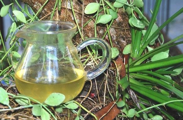 Wild Spring Long Jing Green Tea Gong Fu Cha in my garden
