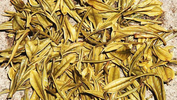 Close-up of wet Anji Bai Cha / Anji White Tea leaves