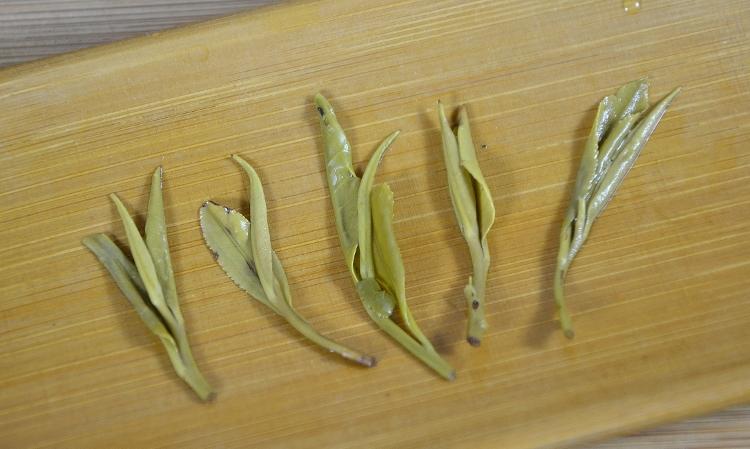 Zi Sun Cha Green Tea wet leaves reveal picking standard