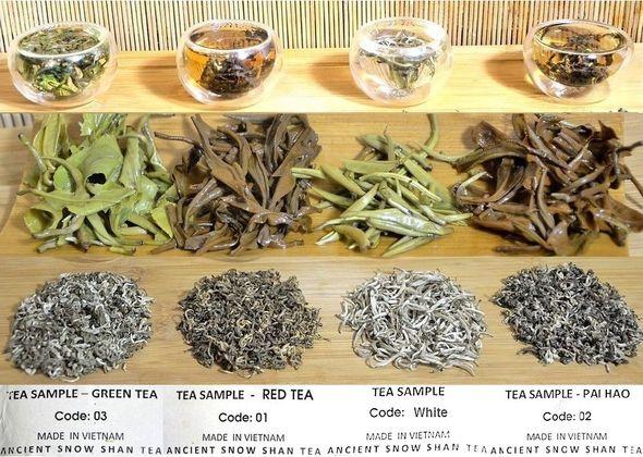 Ancient Snow Shan Tea Collages 5 (590 x )