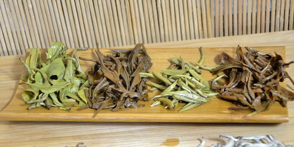 4 Snow Shan teas, wet leaves - excelling both in picking and processing standards
