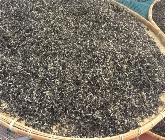 Snow Shan Pai Hao tea from Vietnam oxidizing on large round bamboo trays