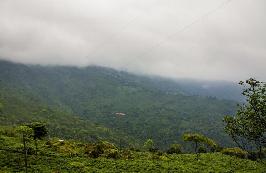 Goomtee Tea Garden, Darjeeling, India