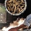 Xiengkhouang Golden Flame Black Arbor Tea from ancient tea trees in Xiengkhouang, Laos