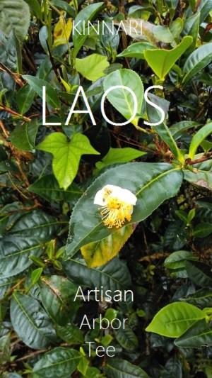 Kinnari Tea, Laos – 6 Teas Sample Set