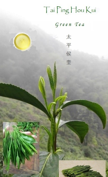 Tai Ping Hou Kui - green tea of the shidaye tea plant variety native to Huangshan, Anhui, with specific picking standard and processing characteristics