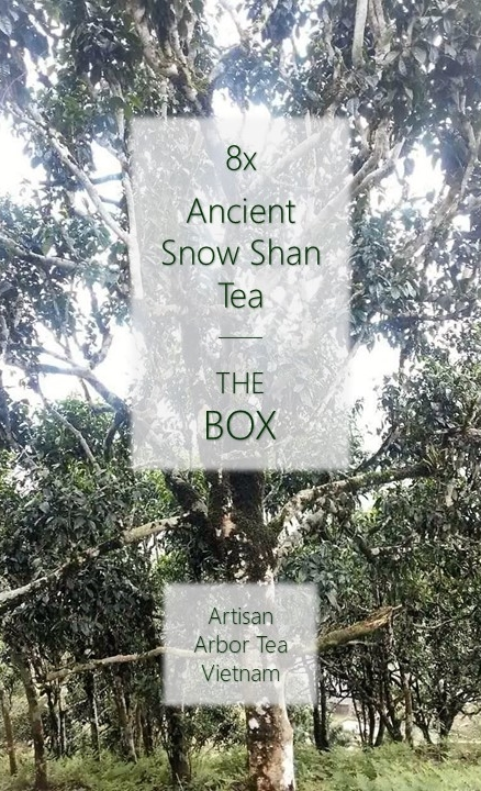 Ancient Snow Shan Box : 8 x Tuyet Shan / Ancient Snow Shan Tea, artisan arbor teas from Ha Giang province, north Vietnam