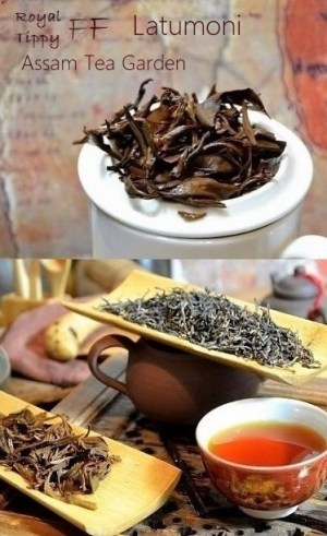 Latumoni Royal Tippy Assam First Flush Black Tea