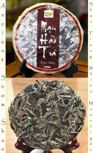 Ancient Snow Shan Trang White Moonlight Tea - 2+1 white tea from ancient Tuyet Shan tea trees, Tai Con Linh mountains, Ha Giang province, north Vietnam