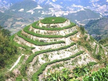"Tie Guan Yin ""Tee-Berg"" in Anxi County, Provinz Fujian, China"