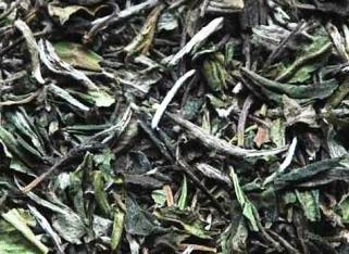 Pai Mu Tan white tea from Fuding, Fujian province, China: buds & leaves close up