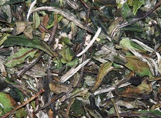 Pai Mu Tan white tea from Fuding, Fujian province, China: buds & leaves closeup
