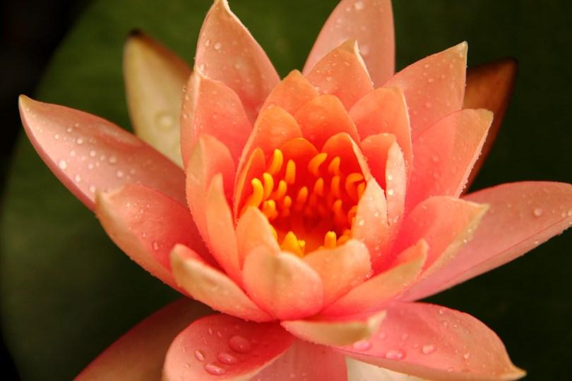 capire la meditazione, cosa significa meditazione,