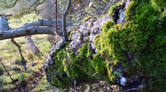 Very old tree with lichen in countryside