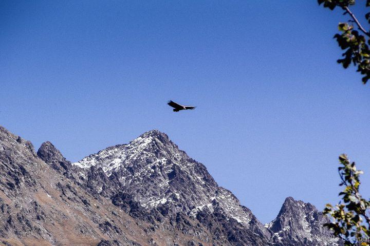 Randonnée Ariège vautour