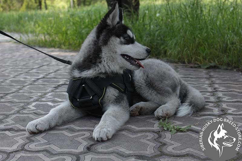 Lightweight Pulling Nylon Harness For Siberian Husky H12