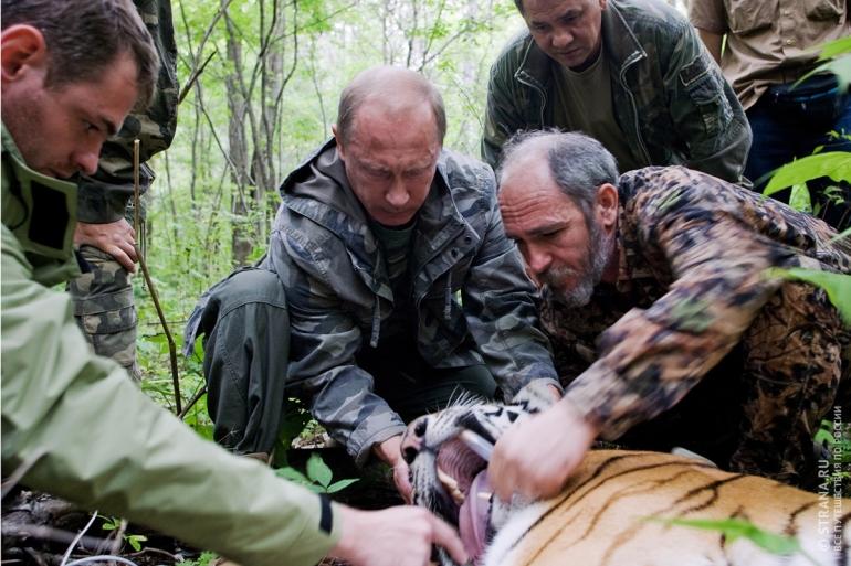 президент выпускает тигров
