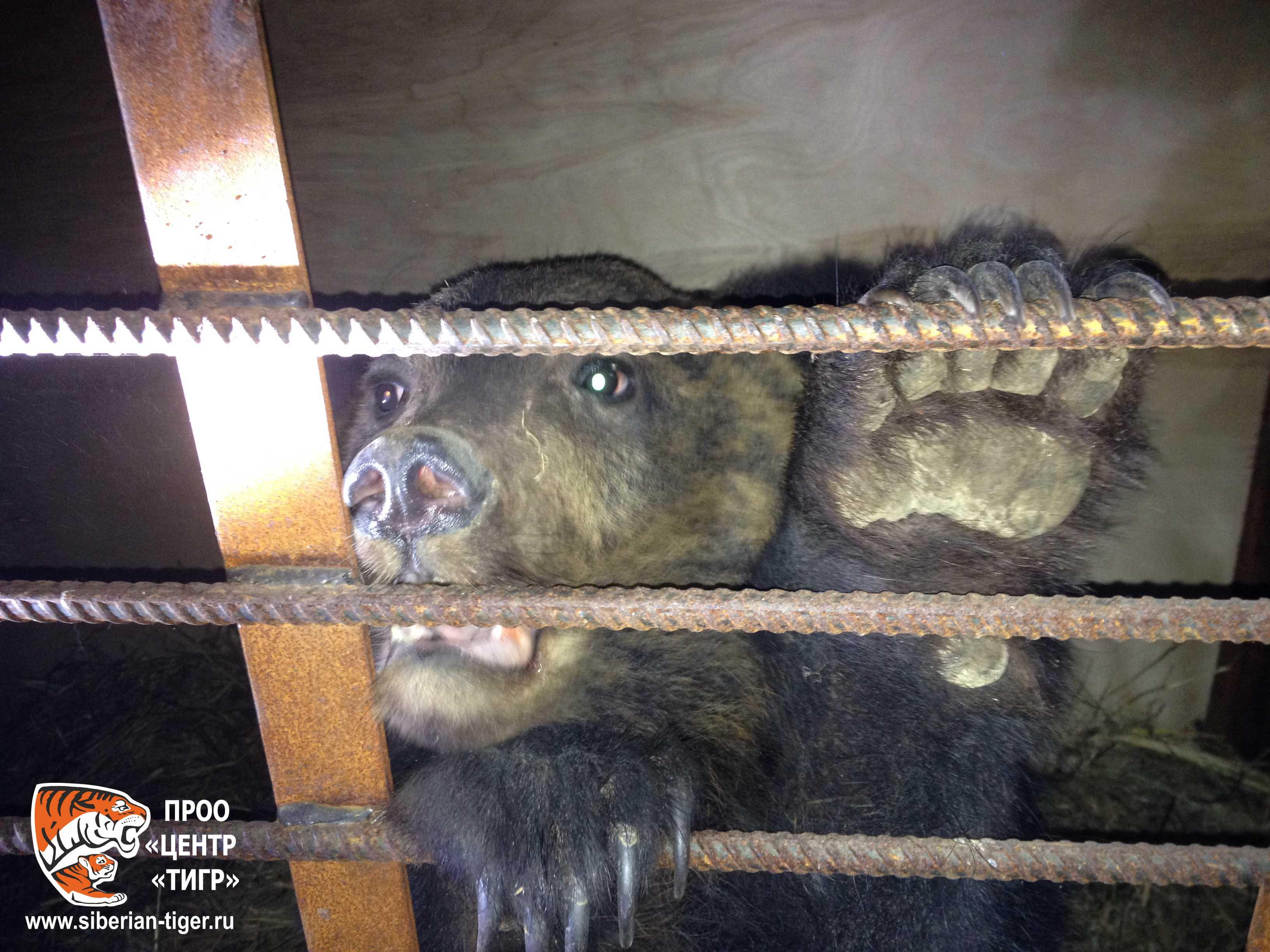 медвежонок-сирота в Центре реабилитации