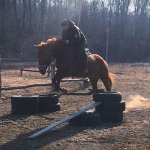 рабочая лошадь картинки