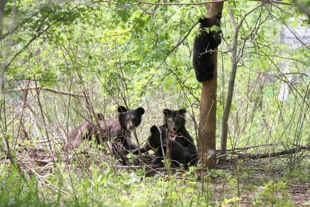 центр спасения медвежат сирот