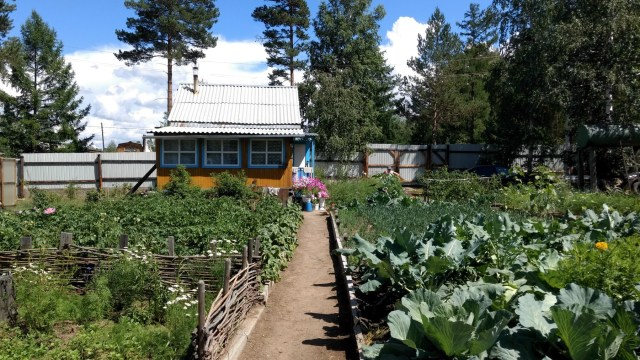 large vegetable garden with a small house in the back