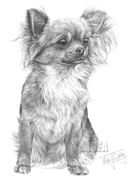 LONG HAIR CHIHUAHUA Fine Art Dog Print By Mike Sibley