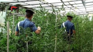 102 grammi di marijuana, denunciato licatese