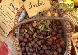 In giro per sagre alla ri-scoperta dei frutti dimenticati