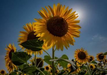 Piantare semi, manifestare sogni