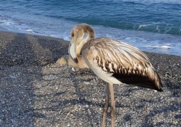 Un fenicottero sulla spiaggia a San Marco