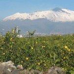 Spremi un limone e assapori l'Etna. Da Acireale nuovo impulso al territorio?