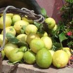 """Il """"limone dell'Etna"""" è Igp"""