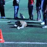 """Concluso, all'Istituto Penale per Minorenni di Catania, il progetto """"Cani in…"""""""