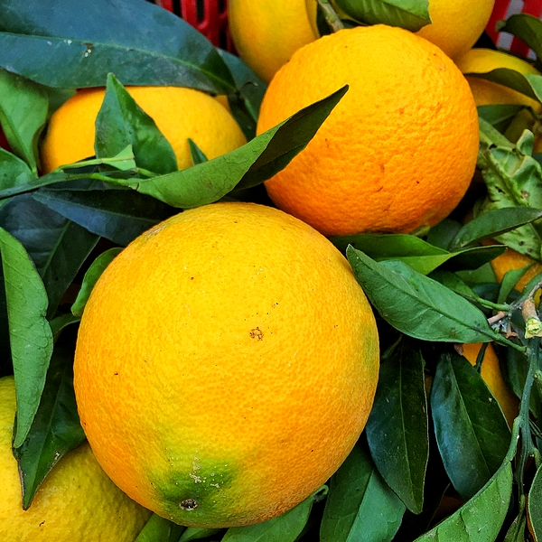 Navel oranges in a market box