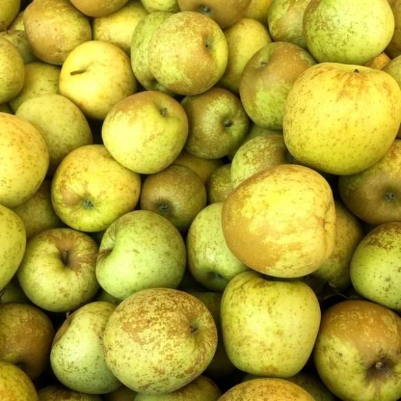 Le mele Golden: gialle e puntinate di marrone