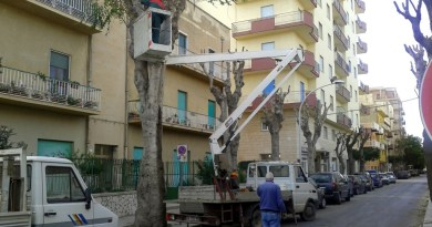 #Messina. Interventi immediati di potatura, tavolo tecnico a Palazzo Zanca
