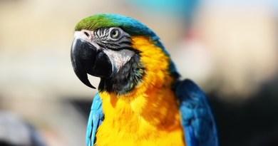 #Palermo. La Polizia ritrova un prezioso pappagallo rubato a Mondello
