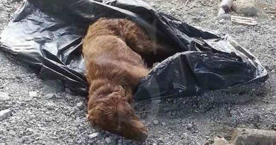 #Messina. Un protocollo d'intesa per i maltrattamenti agli animali