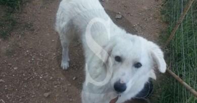 Cronaca. Smarrito cane a San Giorgio di Gioiosa Marea: aiutiamo i padroni a trovarlo