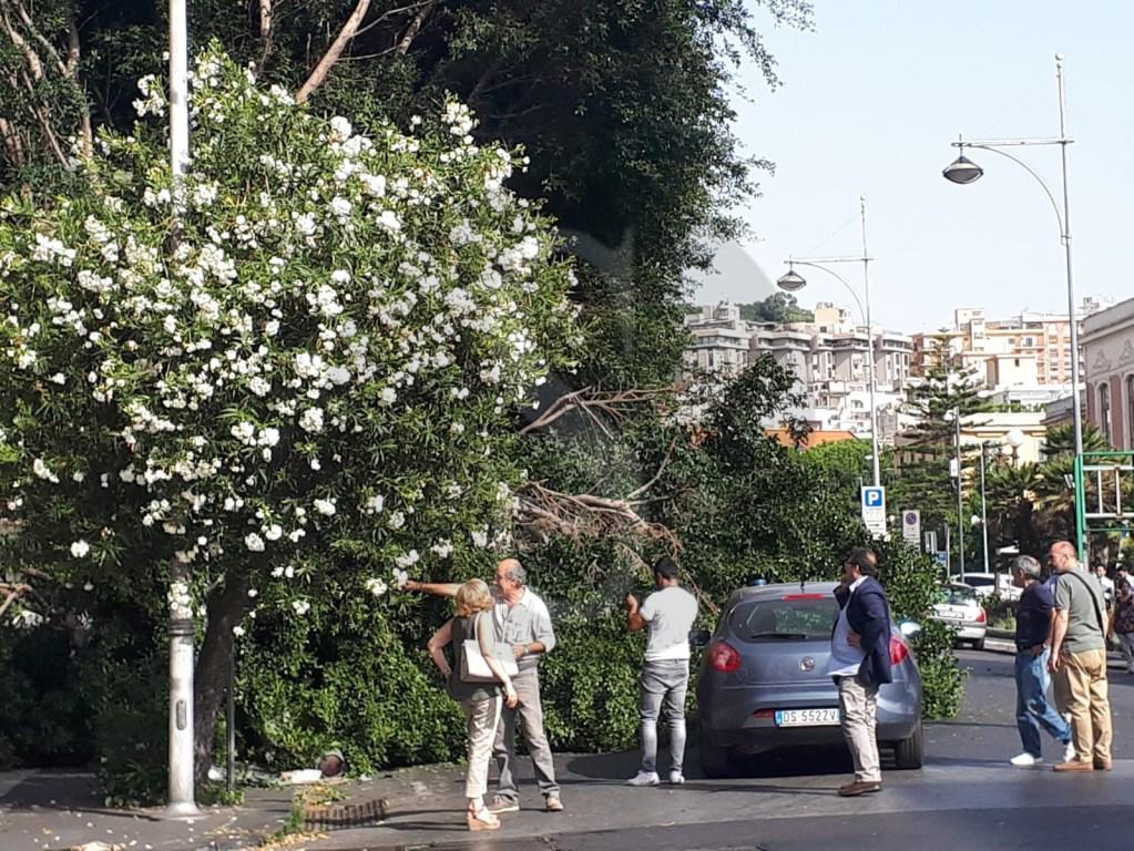 Cronaca. Messina, tragedia sfiorata: albero si abbatte su un'edicola in via Tommaso Cannizzaro