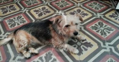 Cronaca. Messina, cagnolina abbandonata a piazza Antonello: la riconoscete?