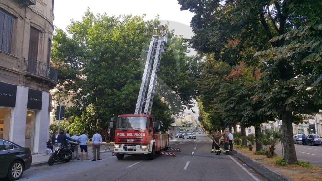 Cronaca. Tragedia sfiorata a Messina, ragazza colpita da un albero in via Garibaldi